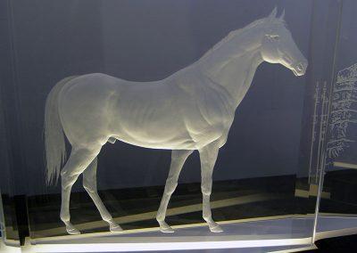 erlacher-horse